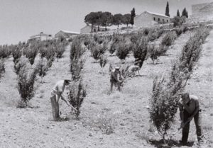 Israel: Kfar Etzion Collective Farm