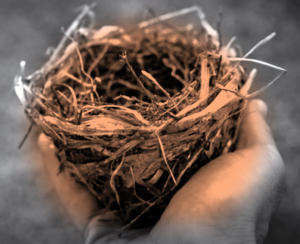 A Full Heart and an Empty Nest | Heather L.L. FitzGerald