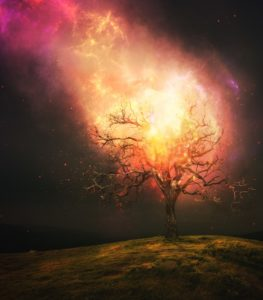 "The Burning Bush: Yeshua as the ""Angel of the Lord"""